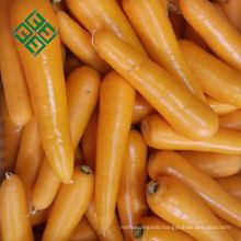 carrot manufacturer fresh carrot china factory