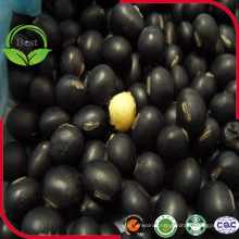 Provide Black Bean with Yellow Kernel Black Soya Bean