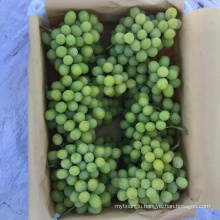 Hot Sell Fresh Sweet green grape wholesale sweet green fresh grapes