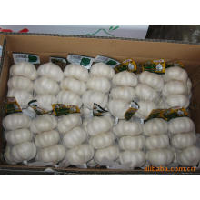 Neue Ernte frische gute Qualität Normaler weißer Knoblauch