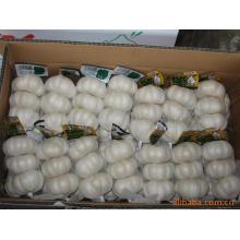 Export New Crop chinesischen reinen weißen Knoblauch