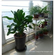 Low Price Light Duty Chrome Wrought Iron Flower Shelf