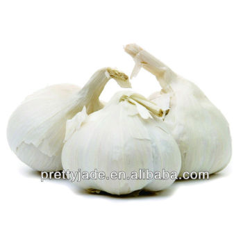 coldroom red and white garlic