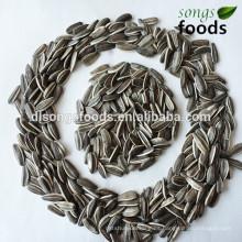 Socio comercial de semillas de girasol en África