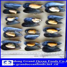 Meio shell mexilhão preço