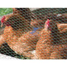 Курица Поднять Шестиугольная Ячеистая Сеть