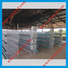 Innaer Poultry Farm Provide You High Quality Broiler Chicken Cage (H4L80)