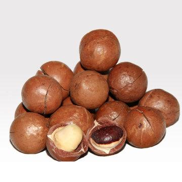 卸売おいしい健康的なドライフルーツ殻付きマカダミア