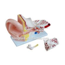 Modelo de orelha para treinamento médico