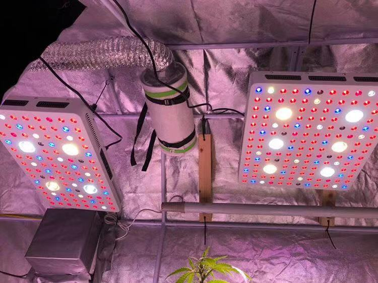 Aging Test Grow Light