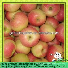 China 2013 nova colheita gala maçã vermelha