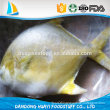 High Quality Pomfret Fish