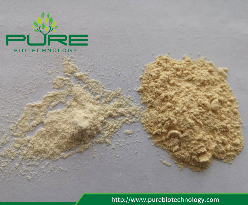 Garlic Powder 80-100 mesh