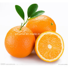 High Quality Delicious Navel Orange