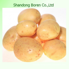 2015 Hot- Sale High Quality Fresh Potato