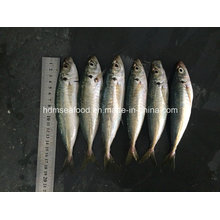 New Fish Round Scad for Sale (14-18cm)