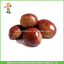 Hot Sale Chinese Fresh Chestnut Packed in Jute Bag Market Price