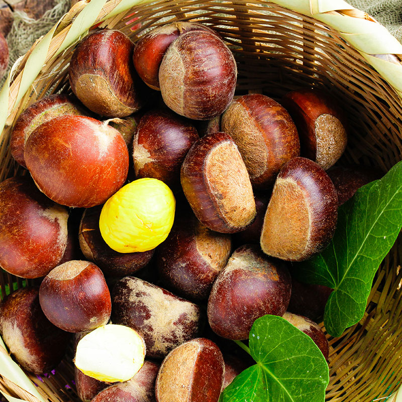 Chinese chestnut natural nut