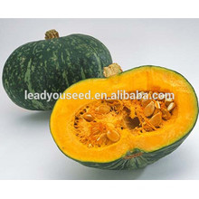 MPU09 Yuanhua deep yellow fresh hybrid sweet pumpkin seeds company