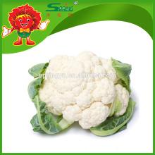 Weißer Blumenkohl mit erstklassigem Blumengemüse