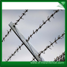 Hot dipped galvanized Straight Razor Barbed Wire