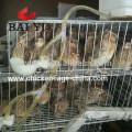 Cages de caille de batterie pour la caille de couche d'oeufs et la caille de poulet