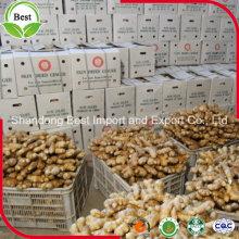 Wholesale Chinese Bulk Fresh Ginger
