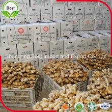 Comércio por grosso de gengibre fresco a granel