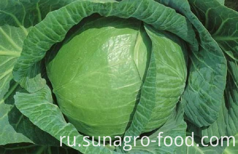 Frozen Packaged Cabbage