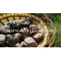 Top Quality Mushroom Fresh Smooth Shiitake Mushroom for Sale