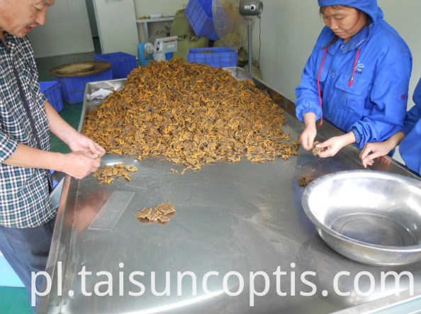 Chinese Herbal Medicines Wholesale Coptis