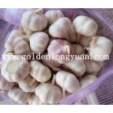 Jinxiang Factory Supply Fresh New Crop Garlic