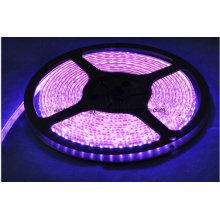 60SMD3528 Ruban LED rose 4.8W / M