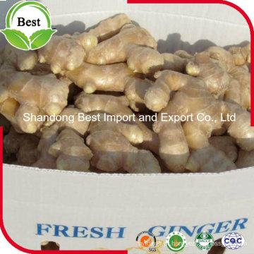 Fresh Ginger 150g 200g 250g