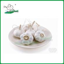 Alho branco normal / colheita nova alho / China alho