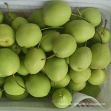 Hot Sale Fresh Shandong Pera Cor Verde