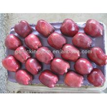 Venta de manzana fresca de manzana / manzana huniu en gran cantidad manzana de bajo precio
