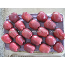 Sell fresh huniu apple/apple plant in large quantity low price apple