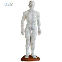 Modèle d'acupuncture masculin en PVC de 50 cm
