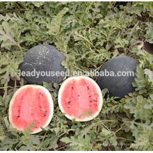 MW10 Yuan alto rendimento brilhante vermelho carne híbrida rodada sementes de melancia preço