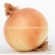 Chinese Fresh Yellow Onion and Red Onion