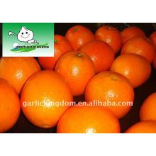 Juic Navel Orange in 15kg Papierkarton