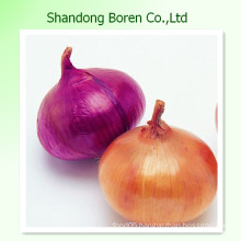 Fresh Onion with Good Price Red Yellow