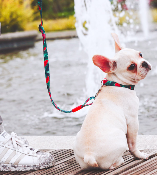 Cool Dog Leashes