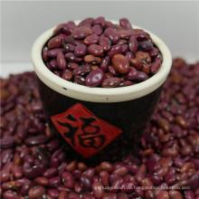 Neue Ernte Kleine rote Bohnen aus China