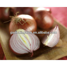 Verkaufen 2013 neue Ernte Gelb Zwiebel