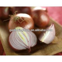 Vender 2013 nuevo cultivo Yellow Onion