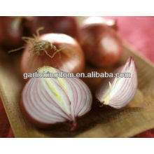 sell 2013 new crop Yellow Onion