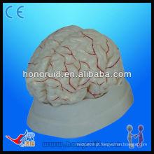 Modelo anatômico médico de alta qualidade do cérebro humano e do modelo de cérebro anatômico da artéria cerebral