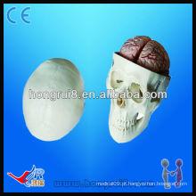Modelo de educação de crânio de alta qualidade, modelo de crânio de pvc, modelo de crânio com cérebro de 8 partes